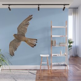 Common Kestrel (Falco tinnunculus). Common Kestrel in flight Wall Mural
