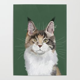 Maine Coon in Green Poster