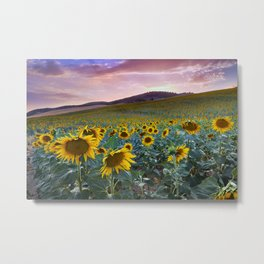 Wonderful Sunflowers. Pink Sunrise Metal Print