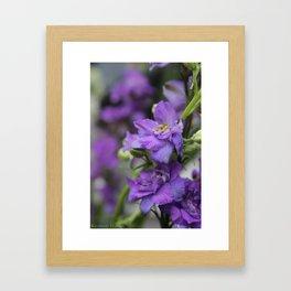 Purple Larkspur Framed Art Print