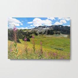 Garibaldi Meadow Metal Print