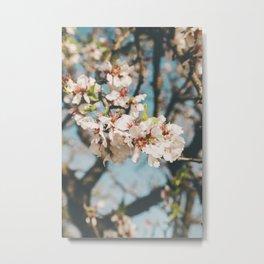 Almond tree Metal Print