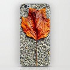 Just A Leaf iPhone & iPod Skin