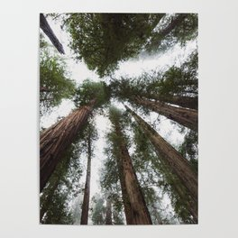 Redwood Portal - nature photography Poster