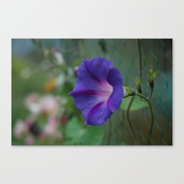 Morning in All Its Glory Canvas Print