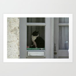 A  Cat in the Window Art Print