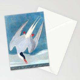 Arctic Tern James Audubon Vintage Scientific Illustration American Birds Stationery Cards