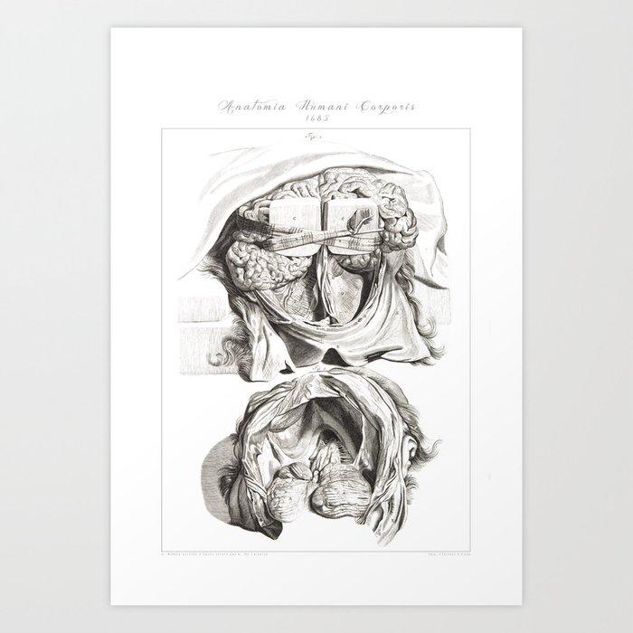 Human Anatomy Art Print Brain Skull Dissection Vintage Anatomy