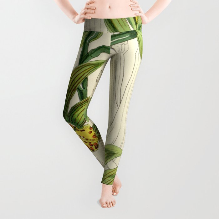 Cymbidium iridioides Leggings