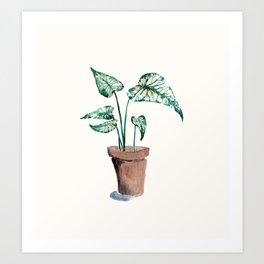 Watercolor Potted Caladium Plant Art Print