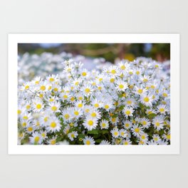 Daisy flower Asteraceae, daisy, beautiful view, daisy hill, View Poster, Canavas Print, Wall Hanging Art Print