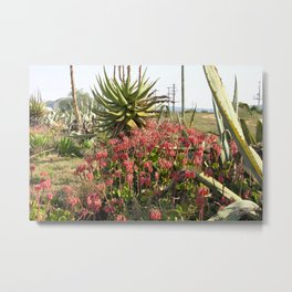 Wild Succulent Plant Aloe Flowers Countryside, South Africa Metal Print