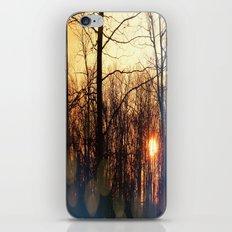 Spring Morning Sunrise iPhone & iPod Skin