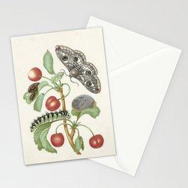 Vintage Botanical Print - Maria Sibylla Merian Stationery Cards