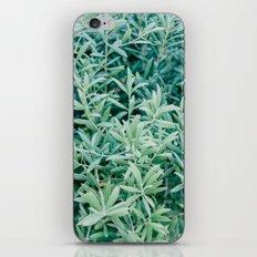 Olive Tree iPhone & iPod Skin