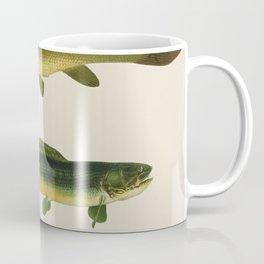 Illustrated New York Game Fish, Dogfish, Mud-fish, Bow-Fish Identification Chart Coffee Mug