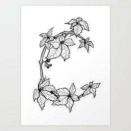 "Native Texas Plants ""C"" Art Print"
