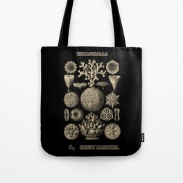"""""""Hexacoralla"""" from """"Art Forms of Nature"""" by Ernst Haeckel Tote Bag"""