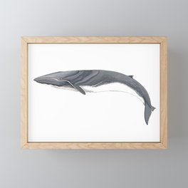 Fin whale Framed Mini Art Print