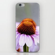 Pink Daisy iPhone Skin