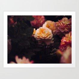 Bouquet Of Sunset Yellow orange Purple Flowers Art Print