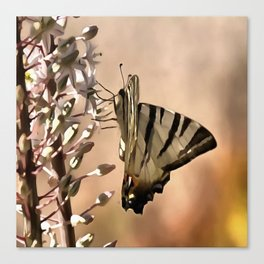 Scarce Swallowtail Feeding Canvas Print