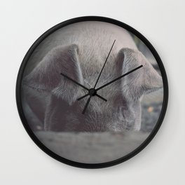 Pig in Oconaluftee Wall Clock