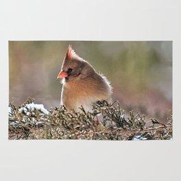 Luminous Cardinal Rug
