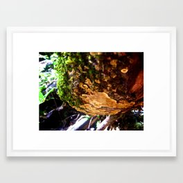 Nature 06 Framed Art Print