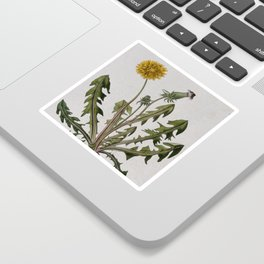 Botanical Dandelion Sticker