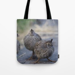 Daddy Quail daycare Tote Bag