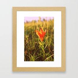 Wild Lily Framed Art Print