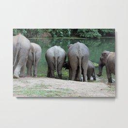 Elephant Butts Metal Print