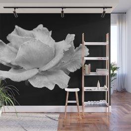 White Rose On Black Wall Mural