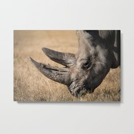 Rhino eating Metal Print