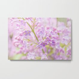 Cluster Of Pink Lilac Flowers. The Misty Beauty Of The Spring Season Metal Print