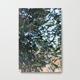 Olive tree Metal Print