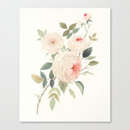 A Rose for William Morris Canvas Print