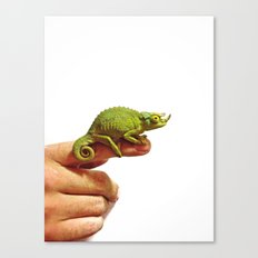 Miniature Dragon Canvas Print