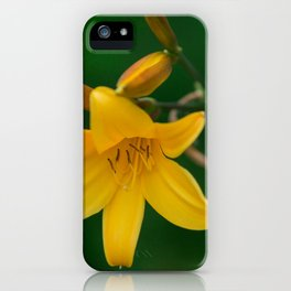 Blossoming Golden Yellow Lily on Green Background iPhone Case