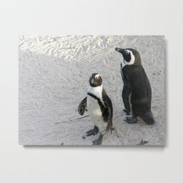 Two African Penguins Boulders Beach, Cape Town, South Africa Metal Print