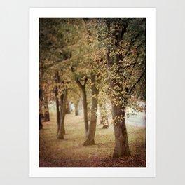 Autumn Woodland Scene Art Print