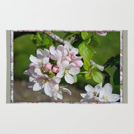 APPLE BLOSSOM Rug