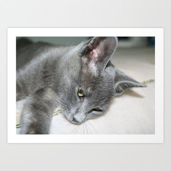 Close Up Of A Grey Kitten Art Print
