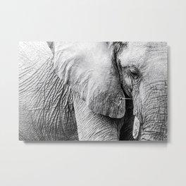 Elephant Wrinkles Metal Print