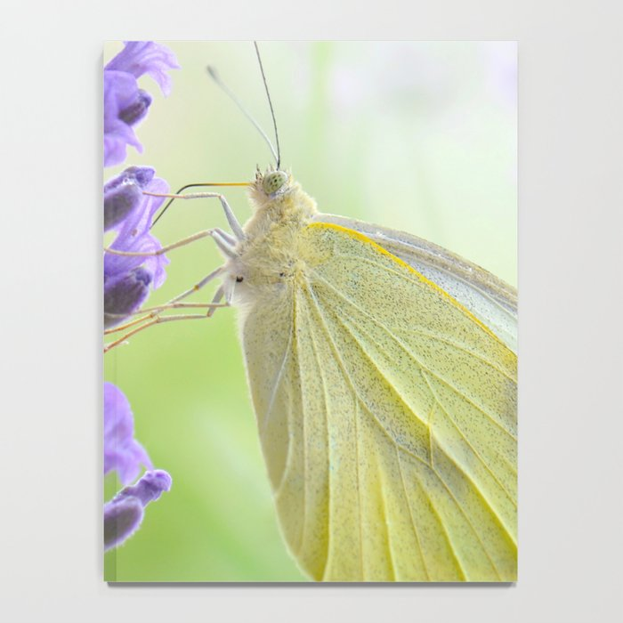 Butterfly 47 Notebook