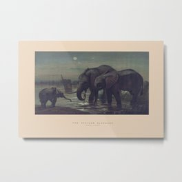The African Elephant Metal Print