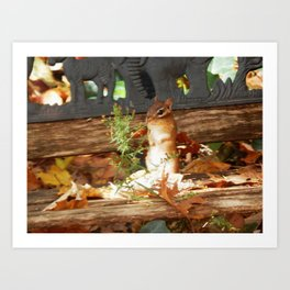 Chippy sunshine Art Print