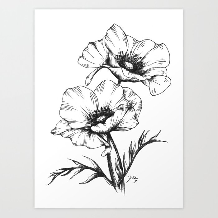 Black And White Anemone Flower Meaning Flowers Healthy
