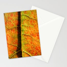 Life Lines Stationery Cards